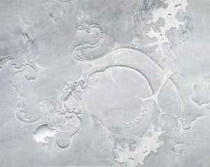 dessin sur papier Graphite on paper 76,2 x 94 cm