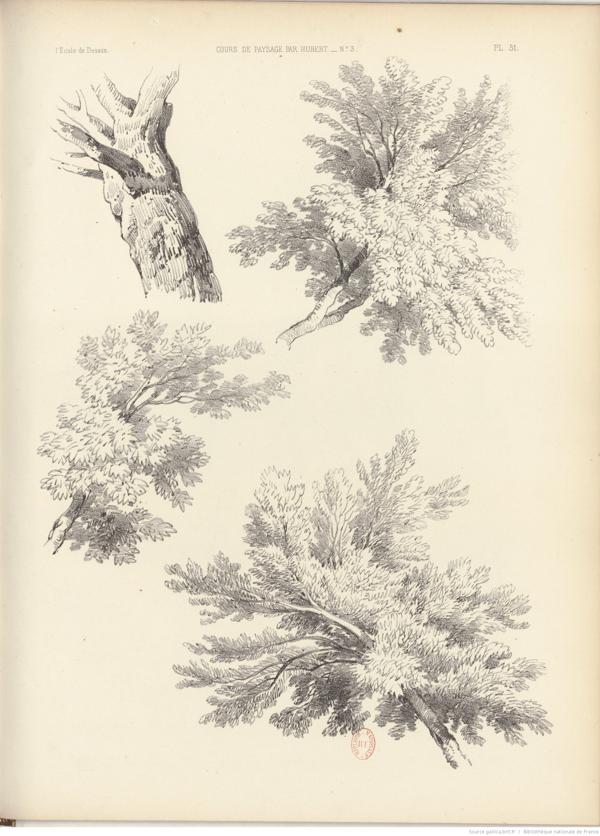 fragment d'arbre, dessin