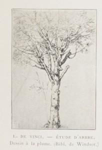 étude d'arbre de L. de Vinci