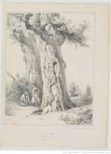 apprendre à dessiner les arbres, chêne