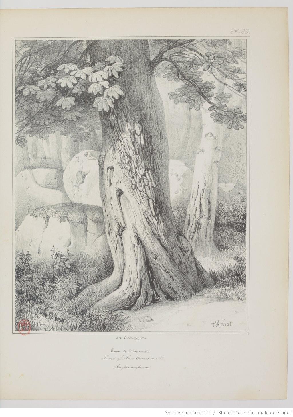 apprendre à dessiner les arbres