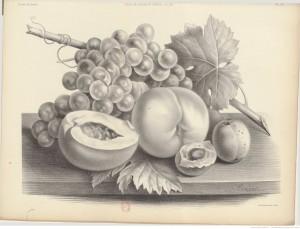 planche illustrée - Gallica