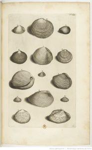 coquillages