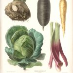 illustration de legumes