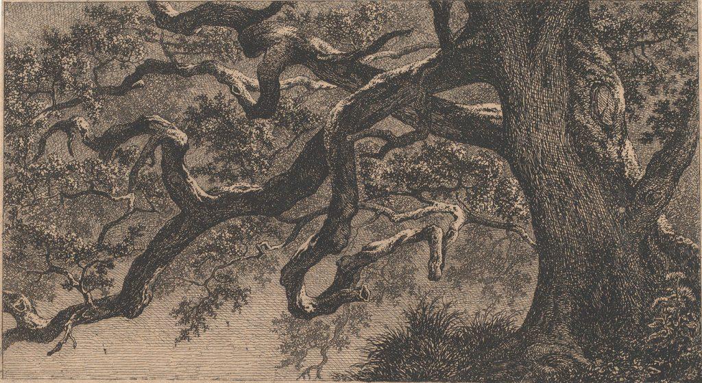 gravure, branches