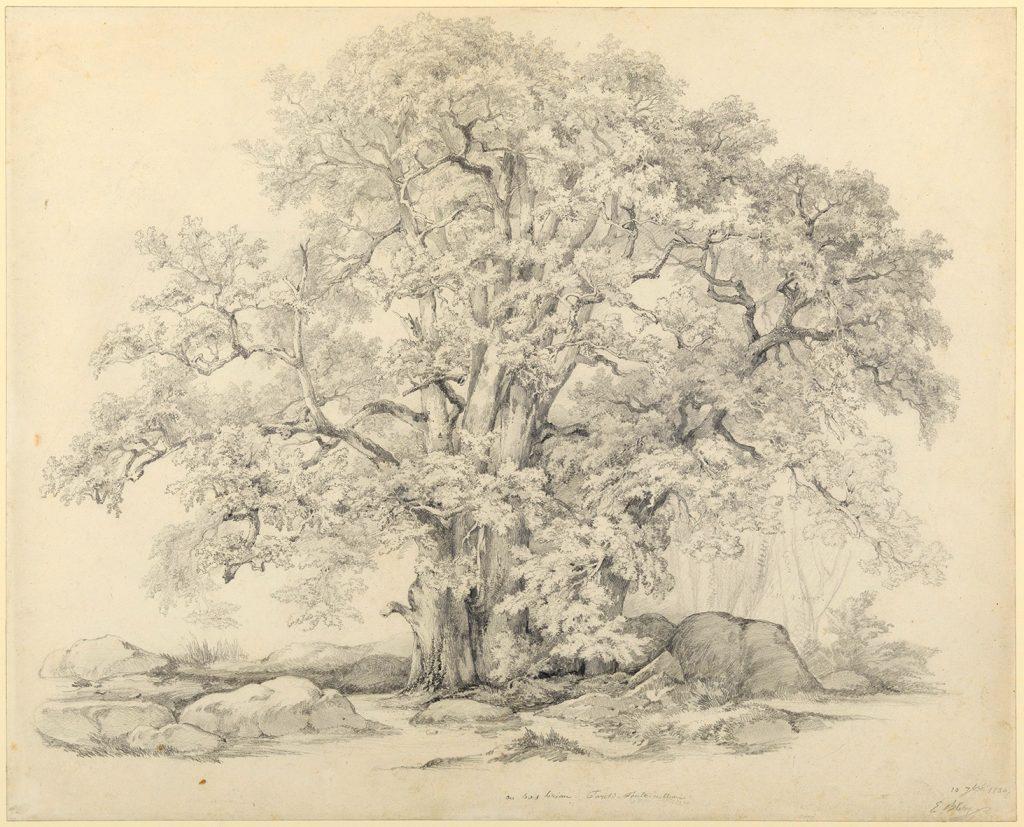 dessin d'un arbre entouré de rochers