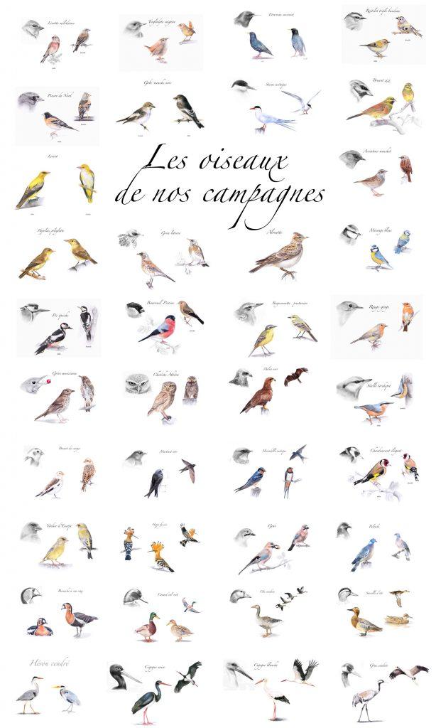 dessins d'oiseaux