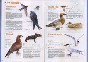 article de presse sur les oiseaux