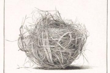 dessin d'un nid , brins d'herbe enchevêtrés