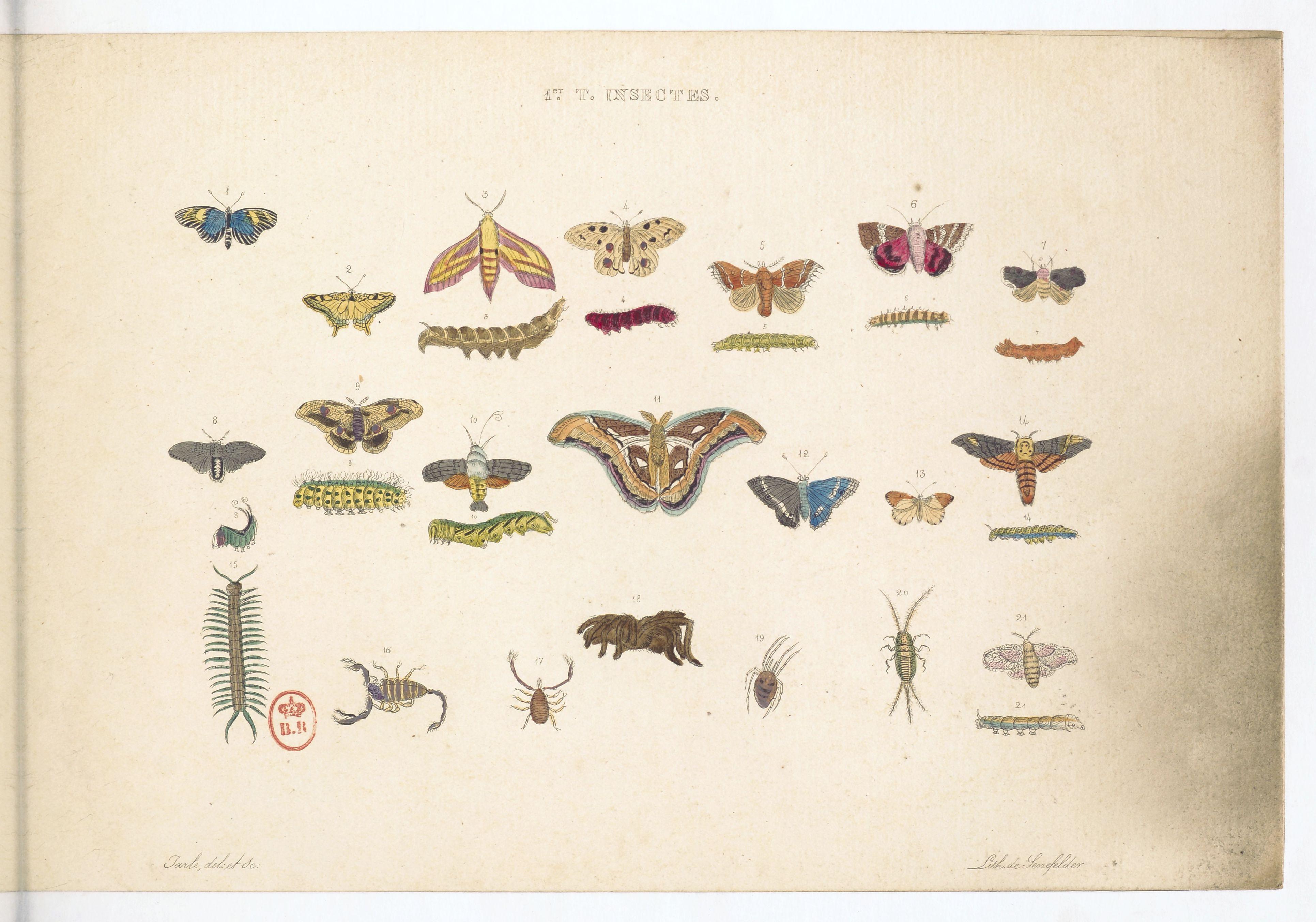 Planche sur les papillons