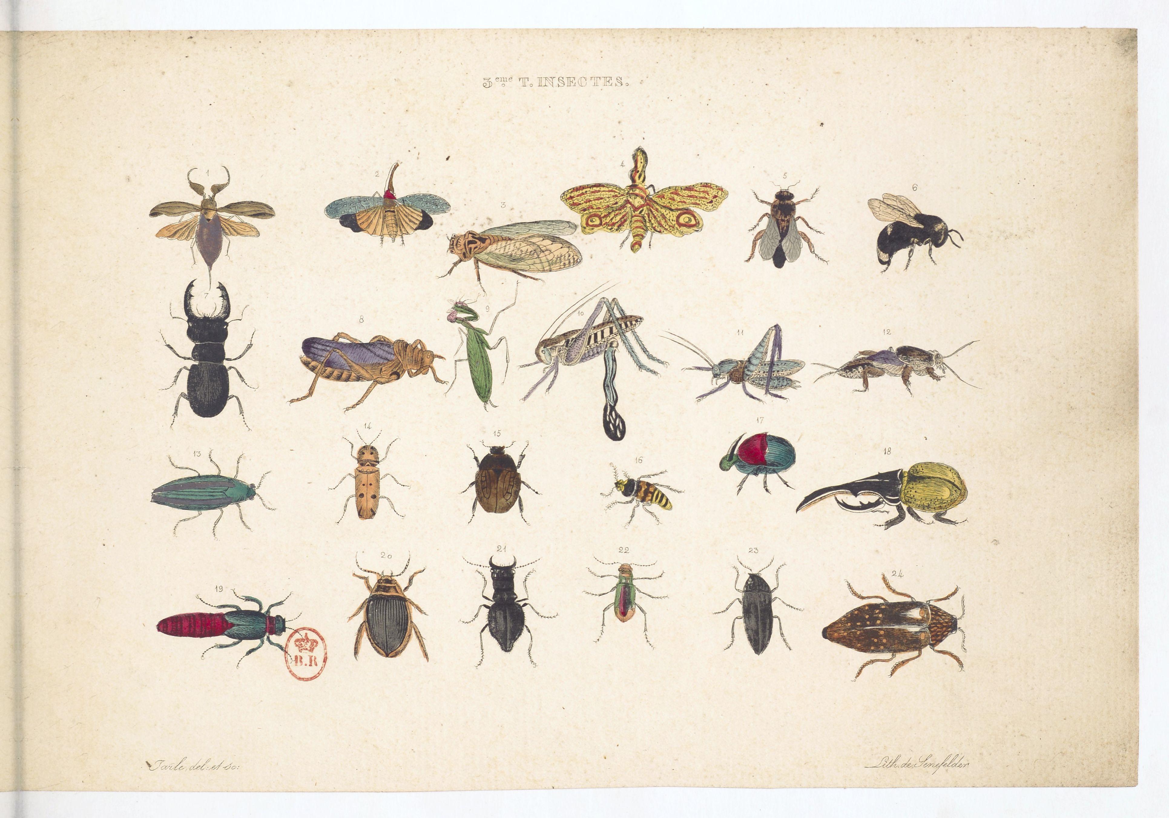 Planche sur les insectes