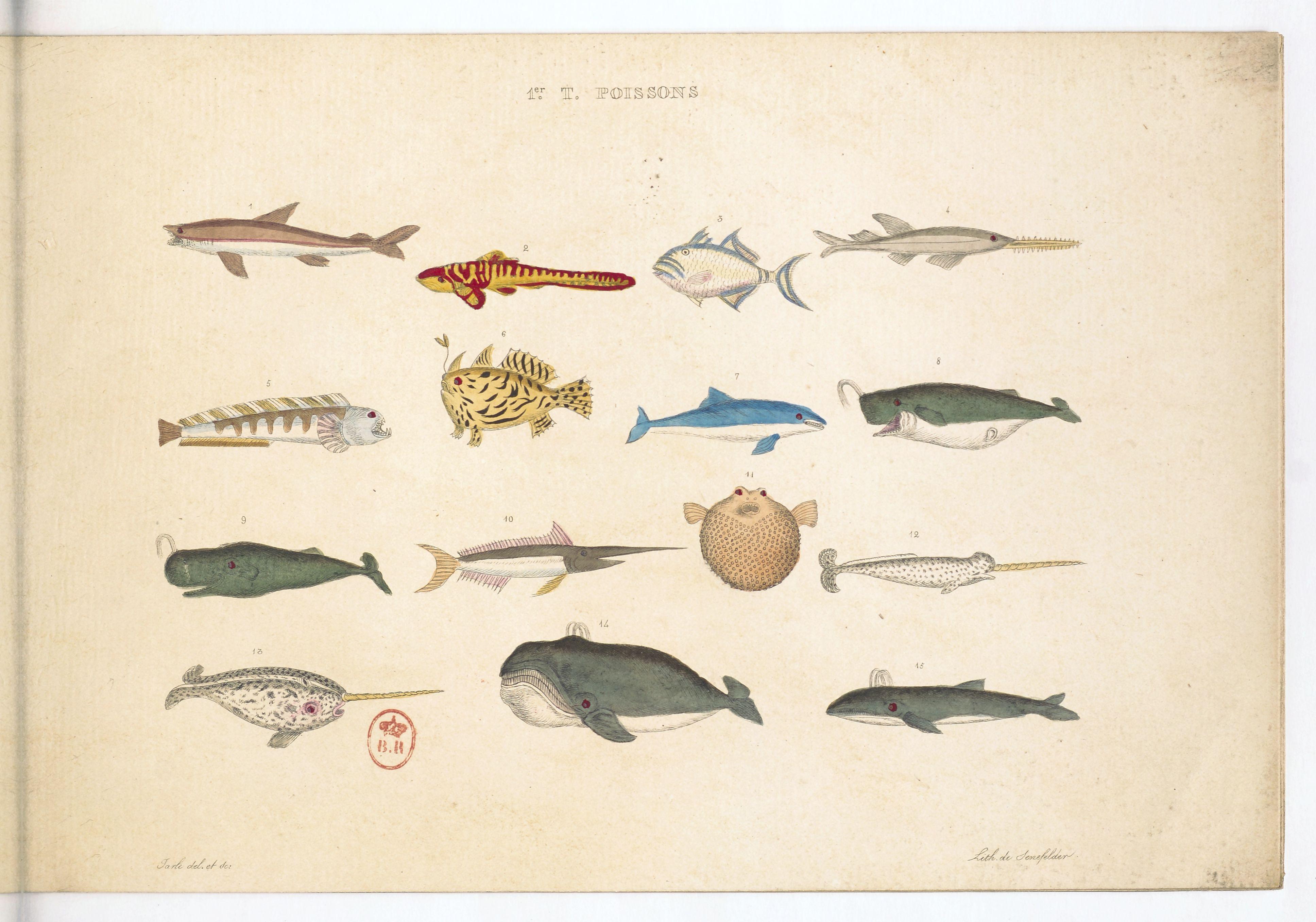 Planches sur les poissons