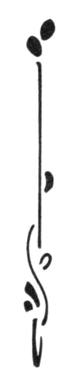 motiftypo-haut02