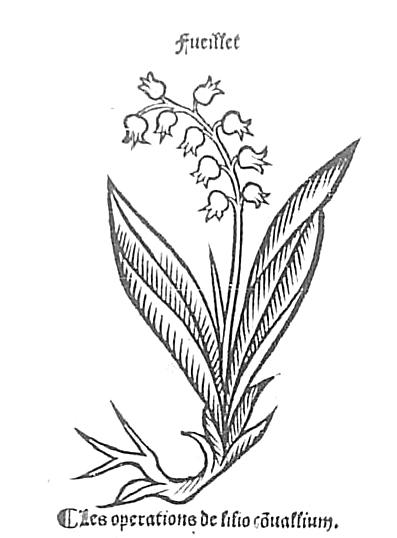 [Illustrations de Le jardin de santé] Johannes von (14..-1504?). Auteur du texte  Date d'édition :      1501