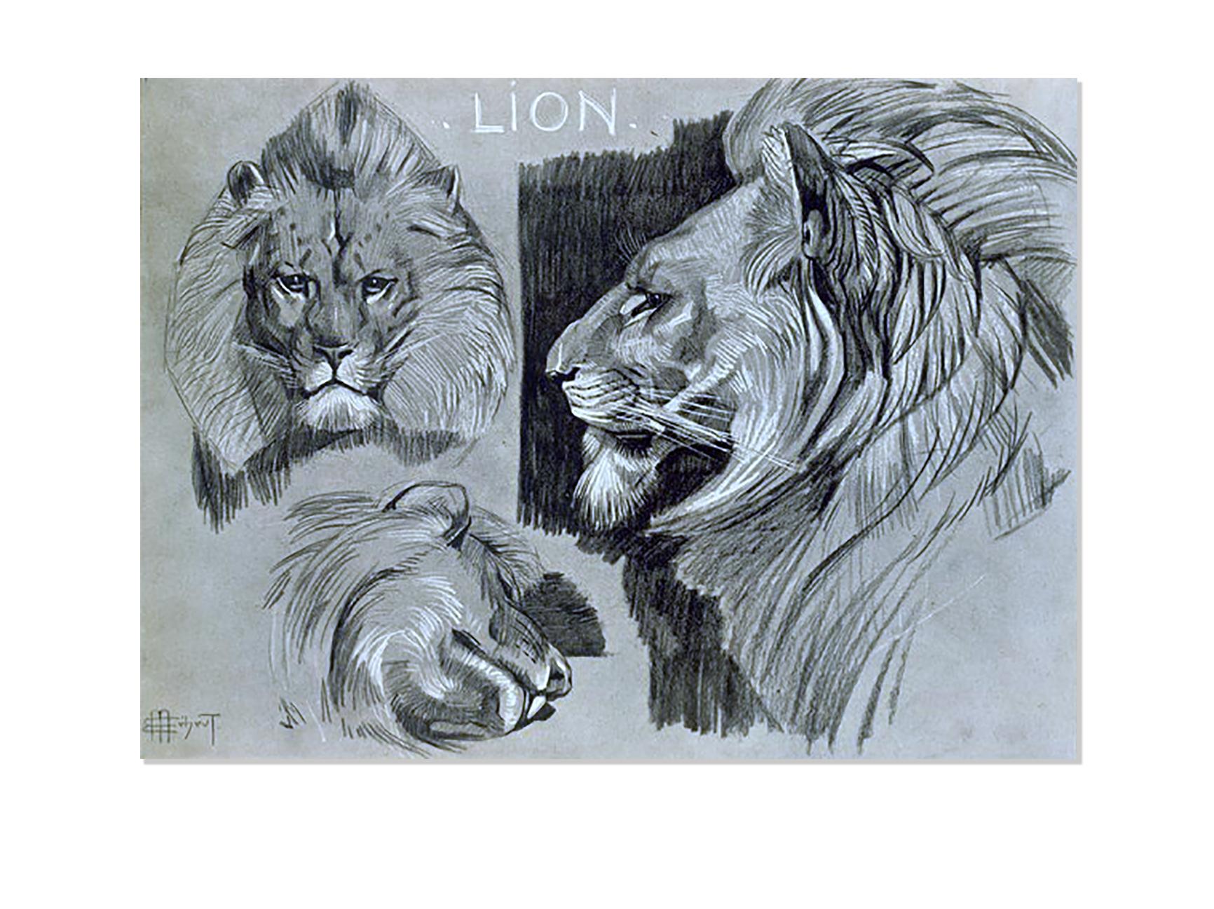 Lion - Études d'animaux, de Méheut, Mathurin, 1882-1958 (Artist) - The Digital Public Library of America-NYPL catalog ID (B-number): b13983745