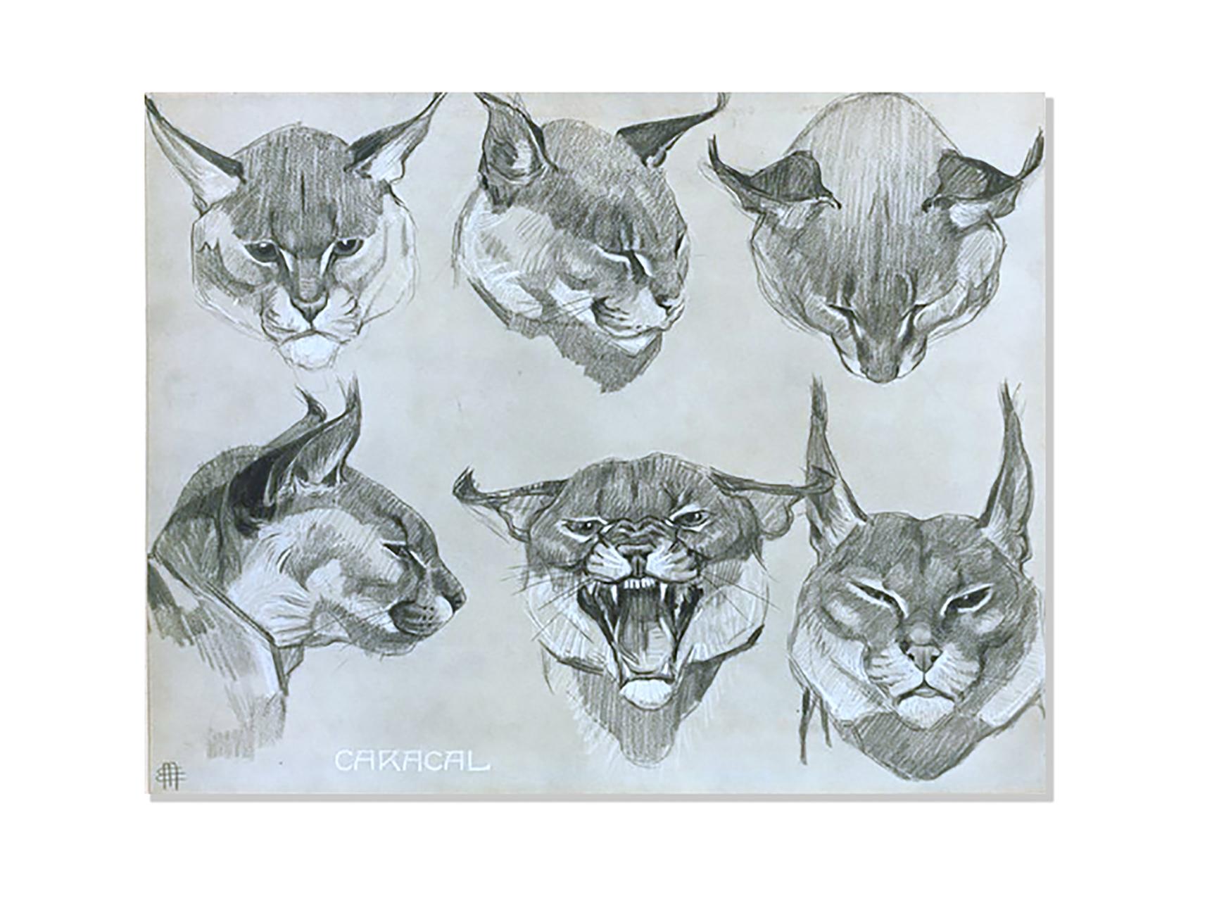 Caracal - Études d'animaux, de Méheut, Mathurin, 1882-1958 (Artist) - The Digital Public Library of America-NYPL catalog ID (B-number): b13983745