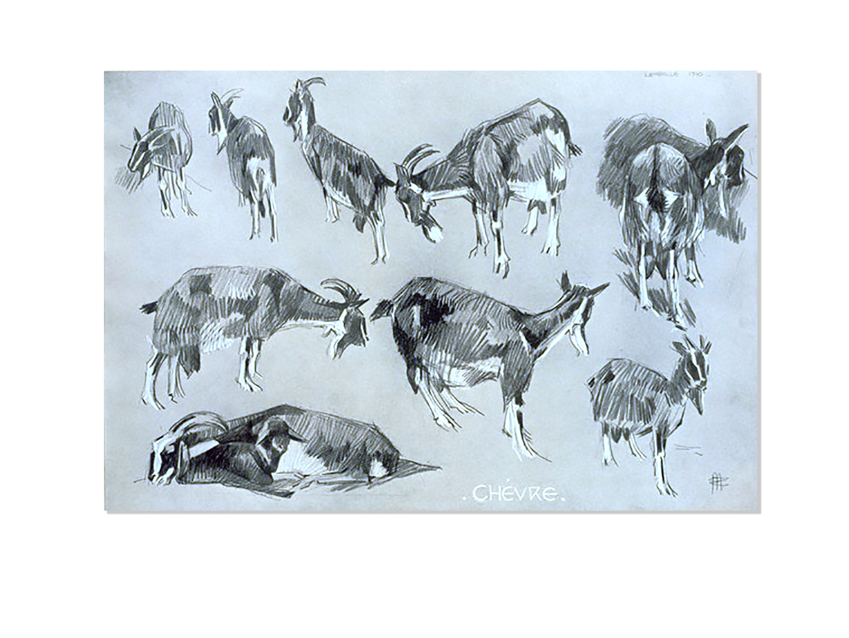 Chèvre - Études d'animaux, de Méheut, Mathurin, 1882-1958 (Artist) - The Digital Public Library of America-NYPL catalog ID (B-number): b13983745