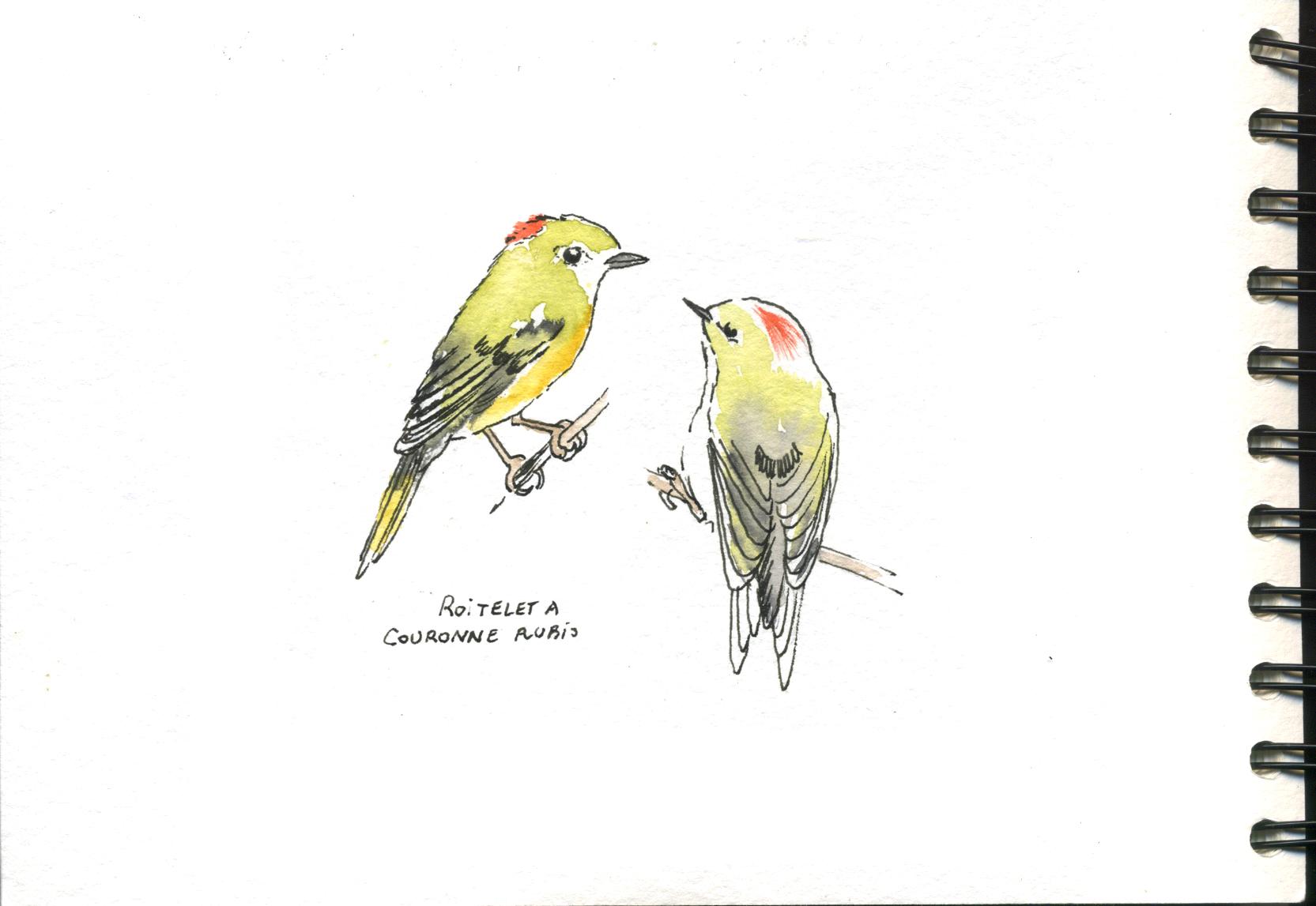 petits oiseaux canadiens