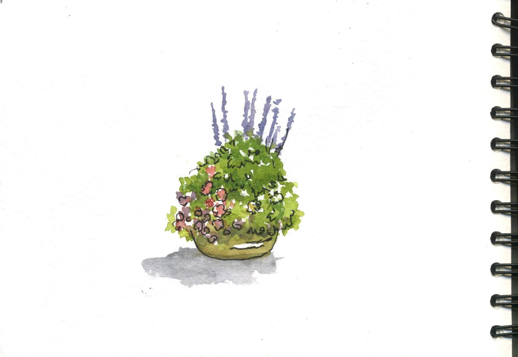potée de fleurs