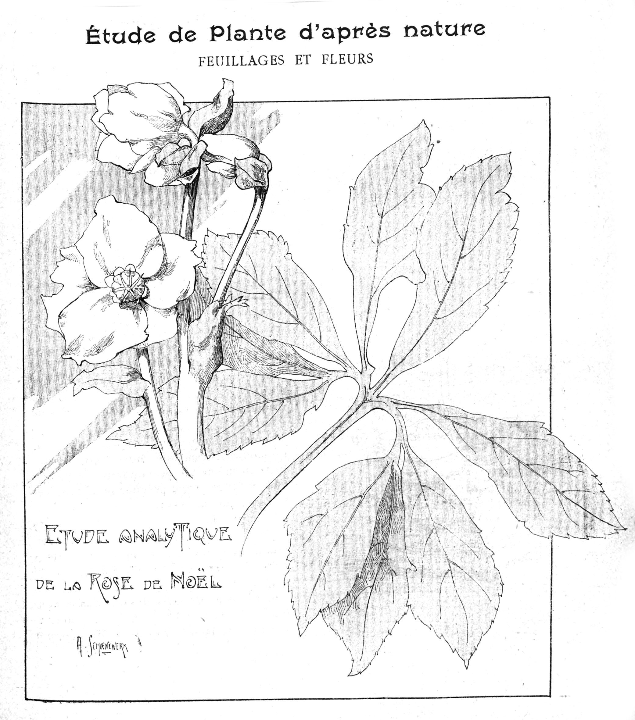 Etude de fleur