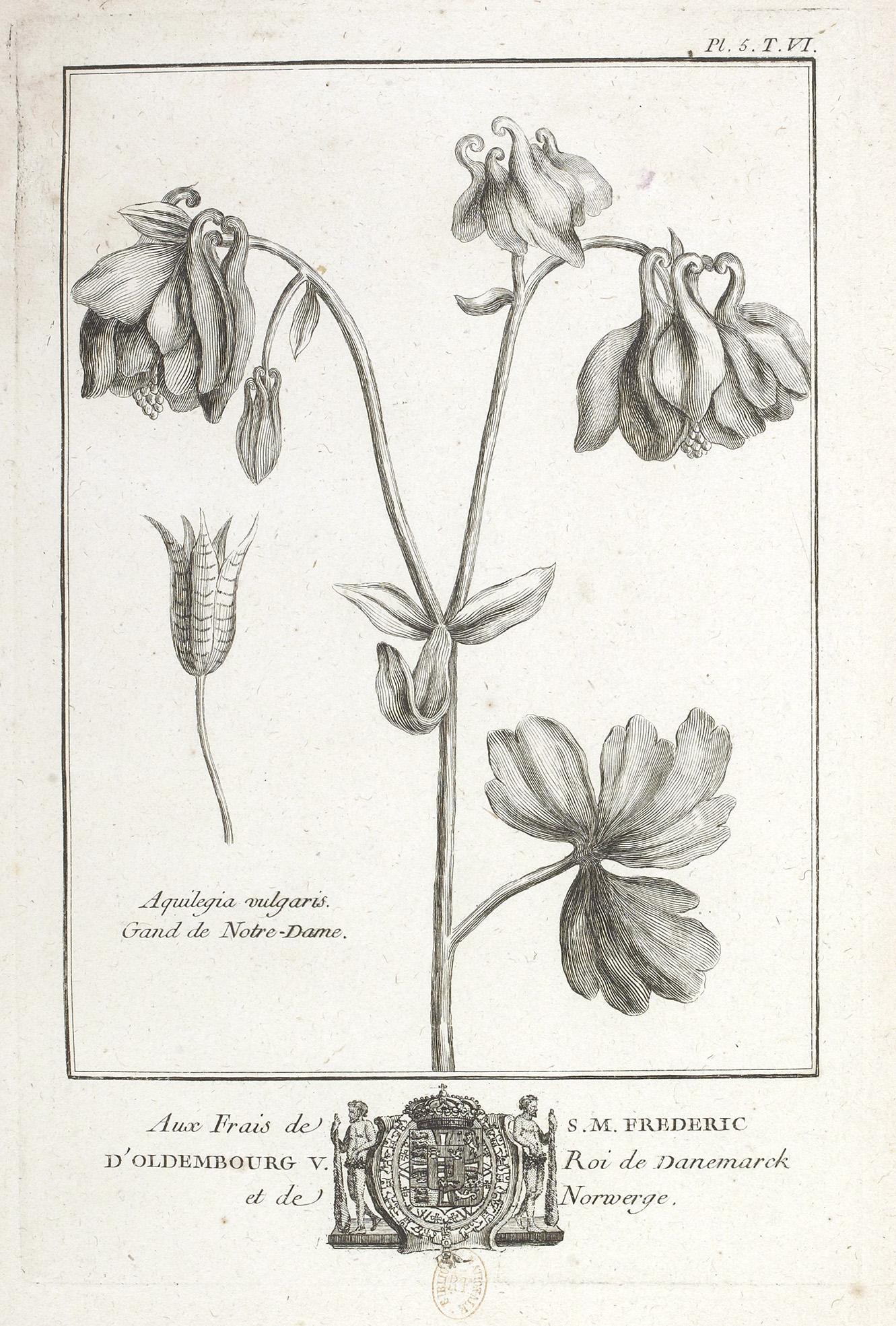 Ancolie -Traité historique des plantes qui croissent dans la Lorraine et les Trois Évêché BNF