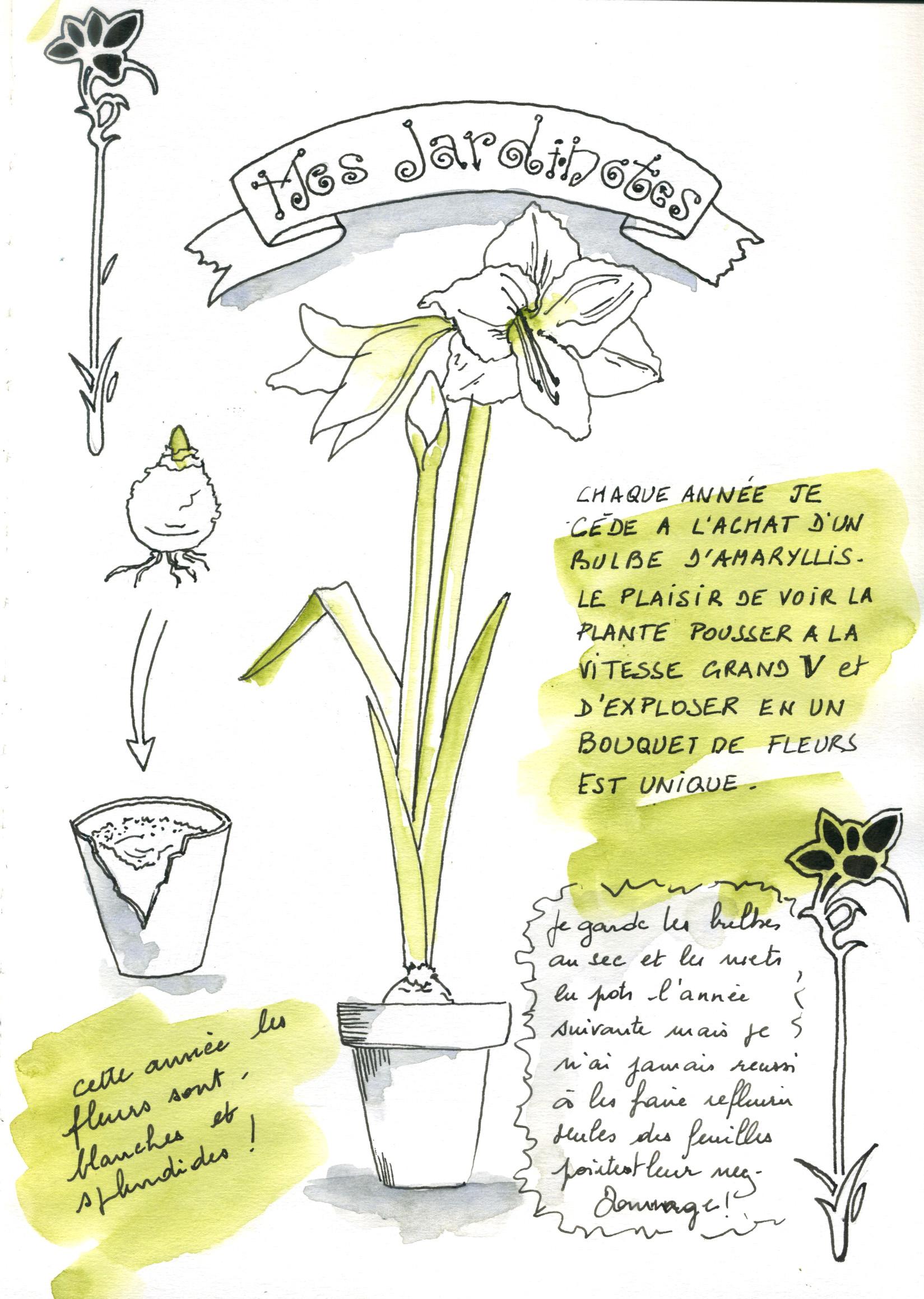 note graphique et visuelle pour planter un bulbe d'amaryllis