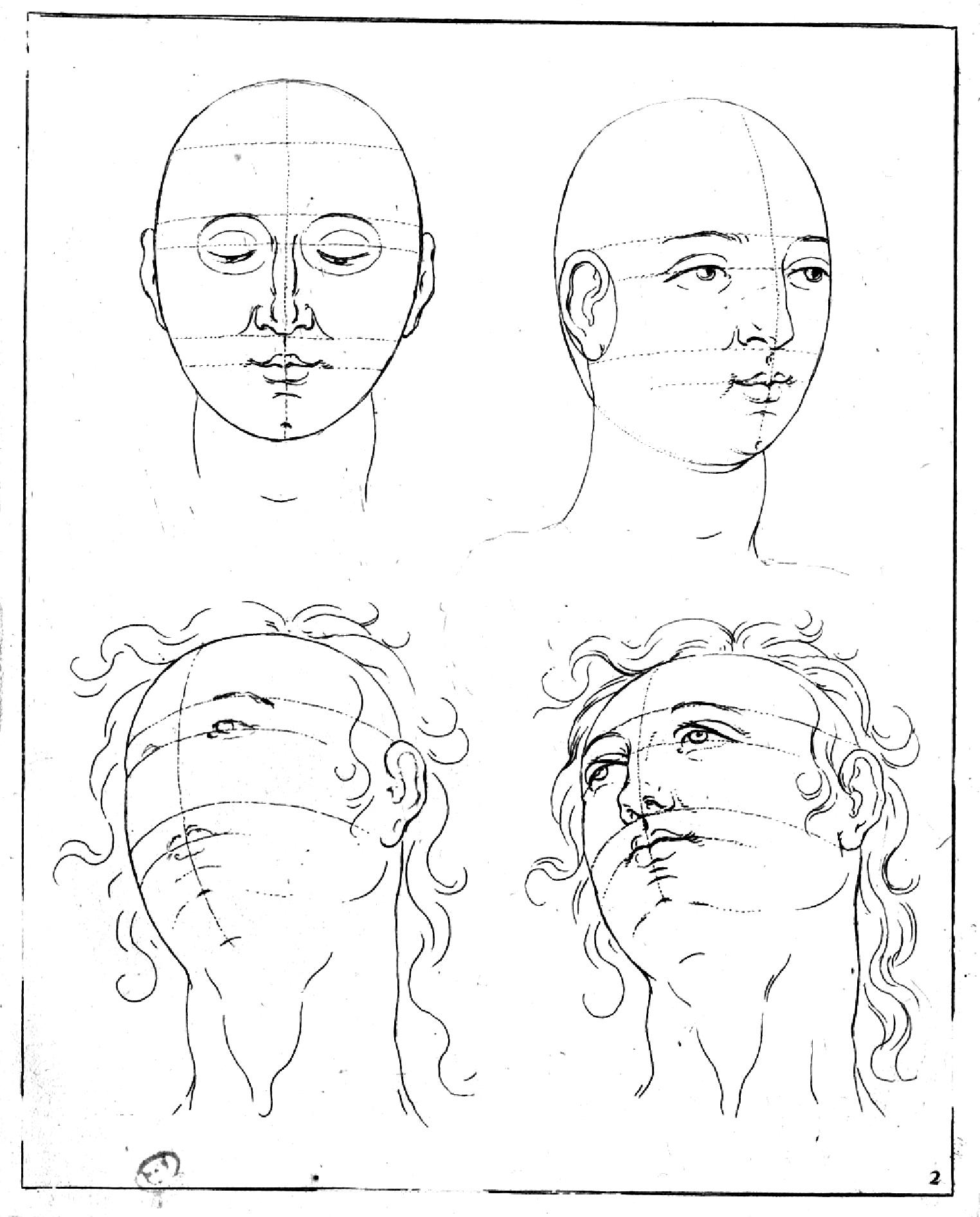proportions de la tête