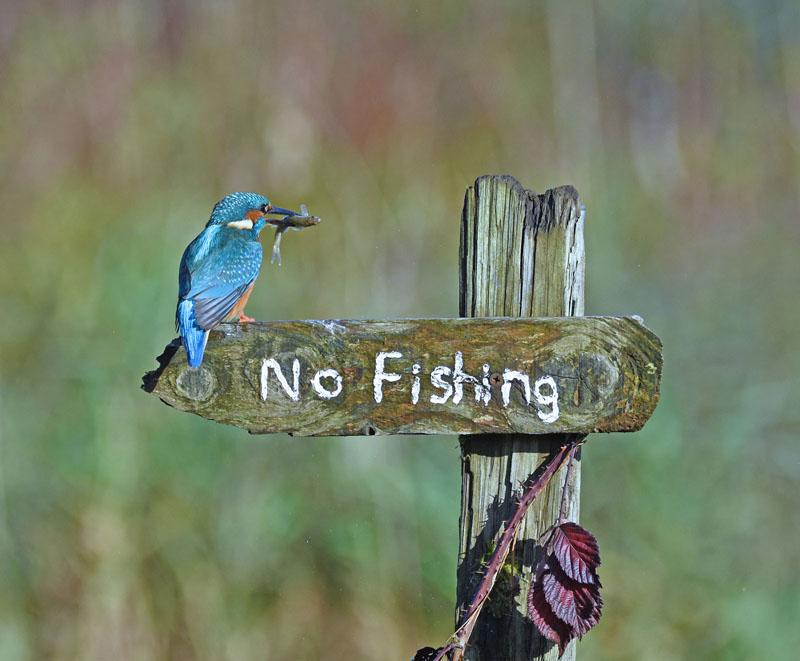 sally-lloyd-jones_its-a-mocking-bird