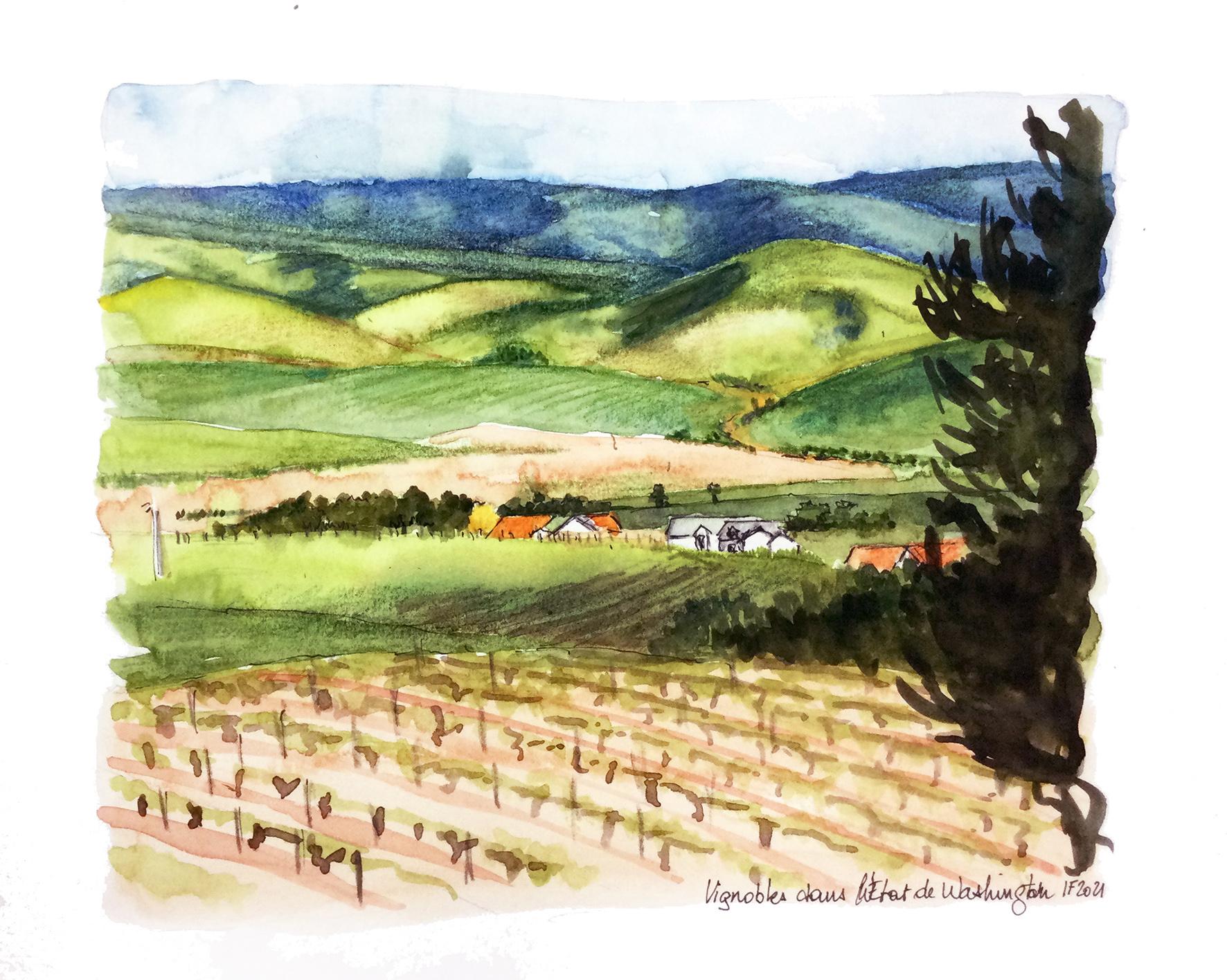 Vignobles dans l'état de Wahington - ©I.Frances 2021