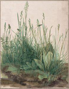 aquarelle, touffe d'herbes, Albrecht Dürer