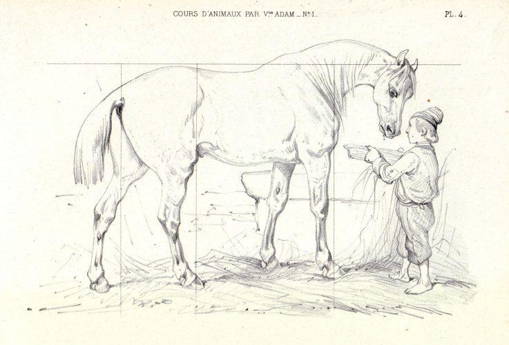 Cours de dessin sur les animaux