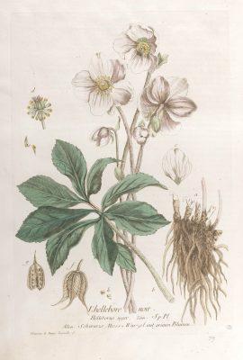 La botanique mise à la portée de tout le monde, Exécuté et publié par les Sr et De Regnault.... Tome 2